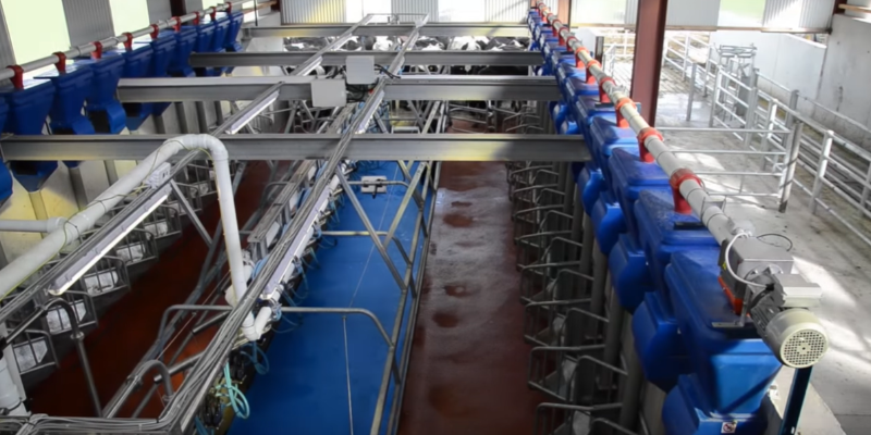 Conventional Milking